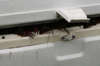 Crawfish_ice_chest